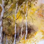 sentiero-nel-bosco